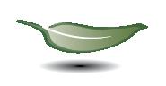leaf2-01